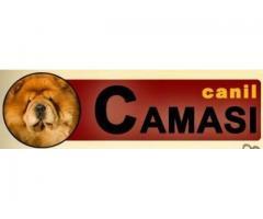 Canil Camasi